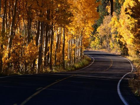 Aspens in Autumn on Road Around June Lake Loop, Eastern Sierra Nevada, June Lake, USA Reproduction photographique