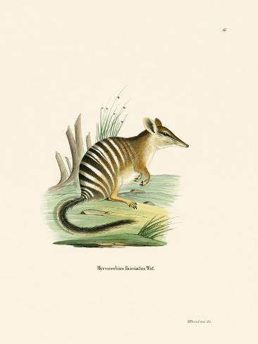 Numbat Reproduction procédé giclée