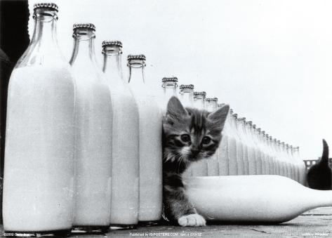 Paradis du lait Reproduction d'art