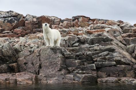 Polar Bear on Harbour Islands, Hudson Bay, Nunavut, Canada Reproduction photographique
