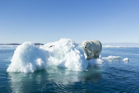 Polar Bear on Iceberg, Hudson Bay, Nunavut, Canada Reproduction photographique