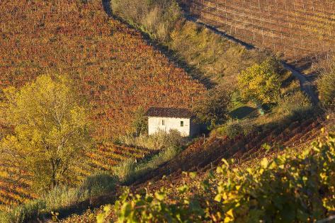 vineyards near alba langhe piedmont italy photographie par peter adams sur. Black Bedroom Furniture Sets. Home Design Ideas