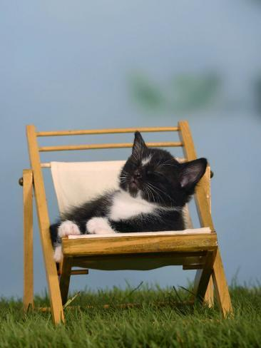 Domestic Cat, Kitten Sleeping on a Deckchair Reproduction photographique