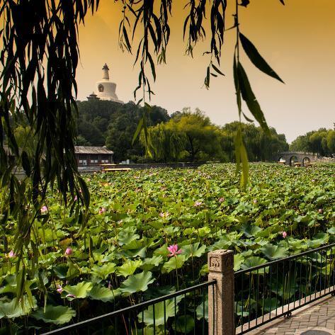China 10MKm2 Collection - Lotus Flowers - Beihai Park - Beijing Reproduction photographique