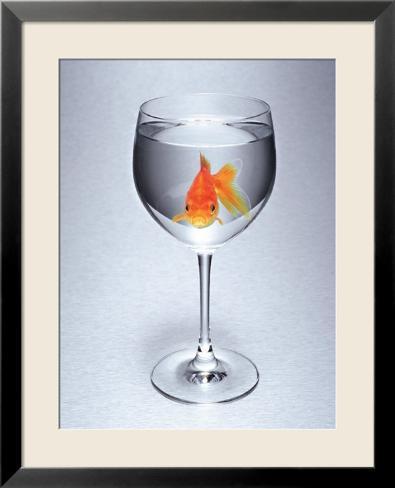 poisson rouge dans un verre vin posters sur. Black Bedroom Furniture Sets. Home Design Ideas