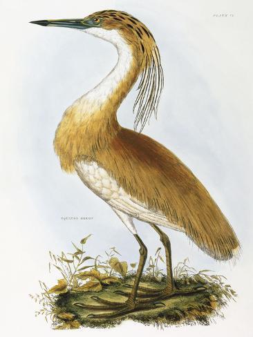 Héron dressé Reproduction procédé giclée