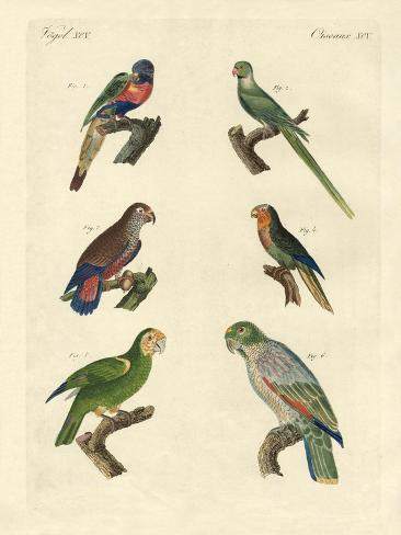 Rare Parrots Reproduction procédé giclée