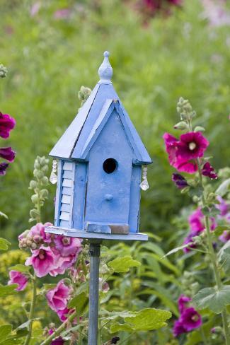 Blue Birdhouse Near Hollyhocks. Marion, Illinois, Usa Reproduction photographique