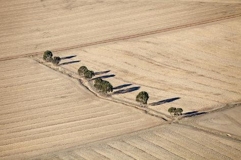 Aerial View of Eucalyptus Trees, South Africa Reproduction photographique