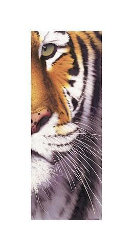 Œil de tigre Reproduction procédé giclée