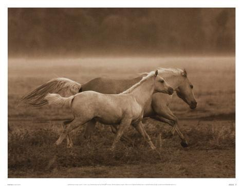 Prairie Run Reproduction d'art