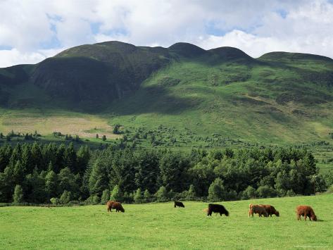 Conic Hill, Stirling, Central Region, Scotland, United Kingdom Reproduction photographique