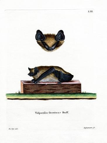 Serotine Bat Reproduction procédé giclée