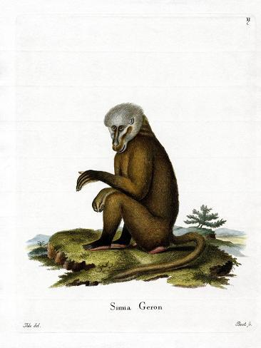 Singe Reproduction procédé giclée