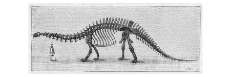 Skeleton of Apatosaurus Found in the Rocky Mountains Reproduction procédé giclée