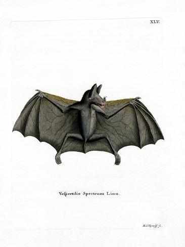 Spectral Bat Reproduction procédé giclée