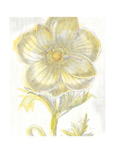 Belle Fleur Yellow II Crop Reproduction giclée Premium