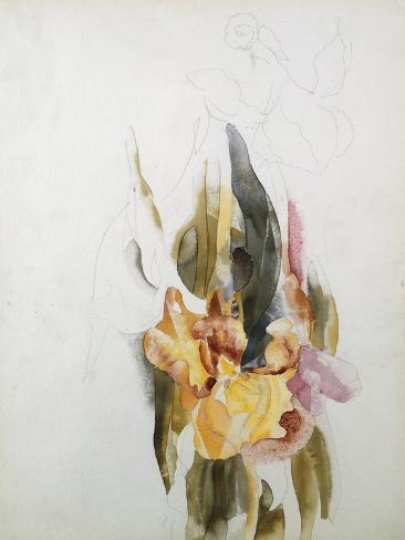 Iris Reproduction procédé giclée