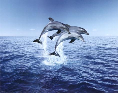 Trio de dauphins Mini-affiche