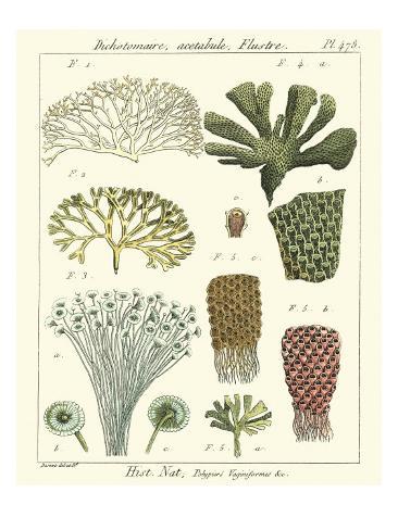 Coral Classification I Reproduction giclée Premium