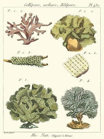 Coral Classification II Reproduction d'art