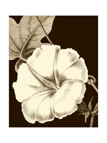 Glorious Blooms II Reproduction d'art