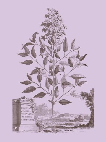 Romantic Jasmine Reproduction giclée Premium