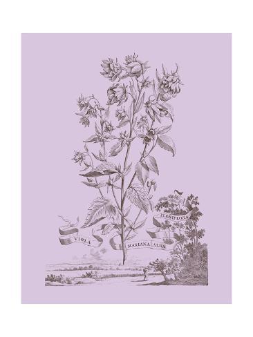 Romantic Violet Reproduction d'art