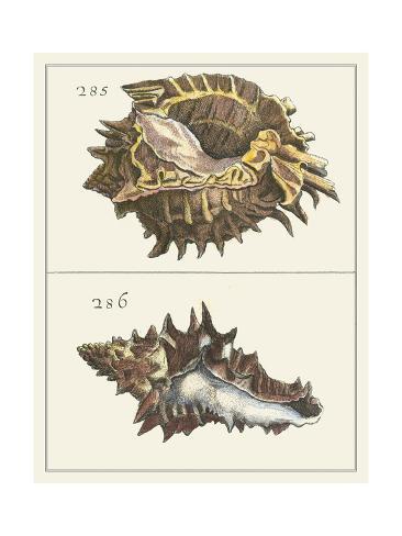 Seashell Menagerie I Reproduction d'art
