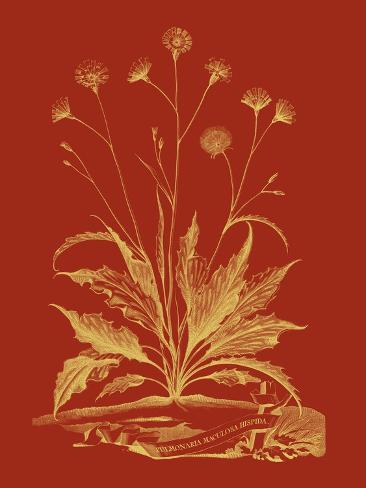 Un Bouquet paprika  III Reproduction d'art