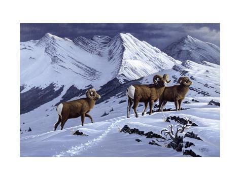 High Country Rams Reproduction procédé giclée