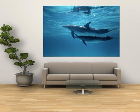 Deux dauphins tachetés Poster géant