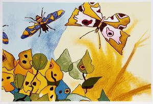 Papillon by Aymon de Roussy de Sales