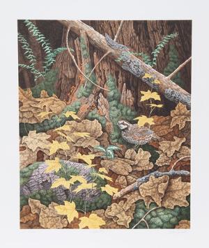 Bob White Quails I by Chris Forrest