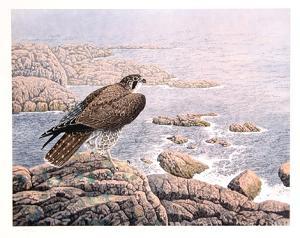 Falcon's Vigil by Chris Forrest