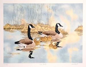 Geese Family by Chris Forrest