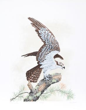 Osprey by Chris Forrest