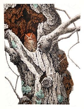Screech Owl by Chris Forrest