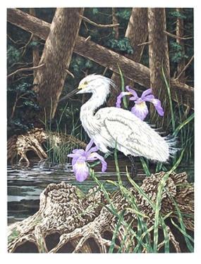 Snowy Egret by Chris Forrest