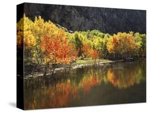 California, Sierra Nevada, Autumn Aspen Trees Reflecting in Grant Lake by Christopher Talbot Frank