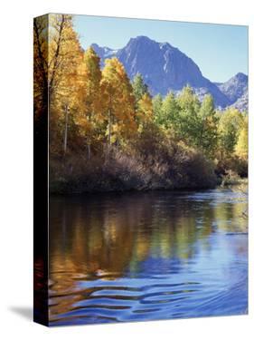 California, Sierra Nevada, Inyo Nf, Autumn Aspen Reflect in Rush Creek by Christopher Talbot Frank