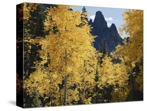 Colorado, Rocky Mts, Uncompahgre Nf. Fall Colors of Aspen Trees by Christopher Talbot Frank