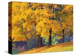 Autumn Foliage at Hoyt Arboretum by Darrell Gulin