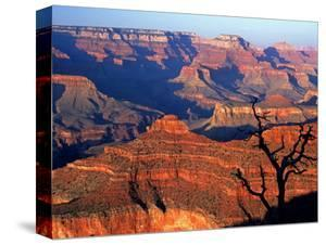 Grand Canyon from South Rim Near Yavapai Point, Grand Canyon National Park, Arizona by David Tomlinson