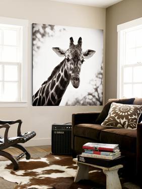 Giraffe I by Debra Van Swearingen