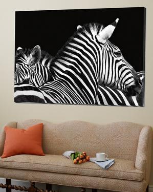 Zebra I by Debra Van Swearingen