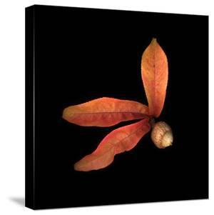 Peach Leaves and Acorn by Diane Miller