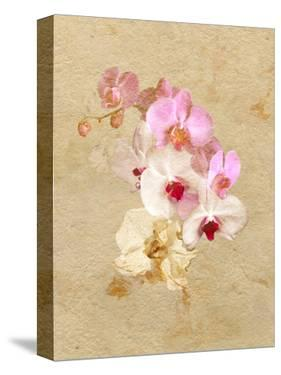 Pink and White Flowers on a Textured Surface by Diane Miller