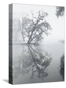 Trees Amidst Fog by Diane Miller