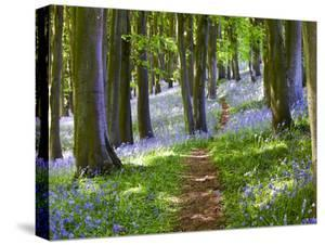 A Walk in the Woods by Doug Chinnery